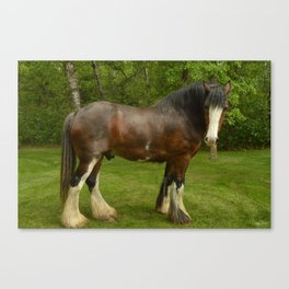 Clyde the Clydesdale Canvas Print