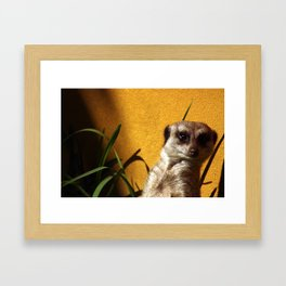 Meerly Curious Framed Art Print