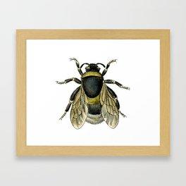 Vintage Bee Illustration Framed Art Print