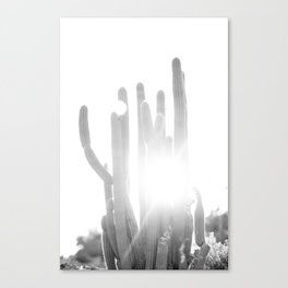 Sun blazing through San Pedro Cactus Canvas Print