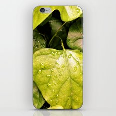 Green Vines in the Morning Dew iPhone & iPod Skin