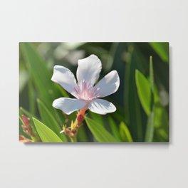 Oleander 134 Metal Print