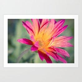 Pink Orange Flower 1 Art Print
