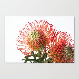 Fynbos Botanical Collection 4 Canvas Print