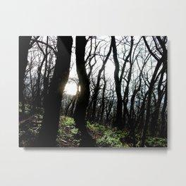 Sun and trees Metal Print