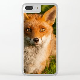 British Red Fox Clear iPhone Case