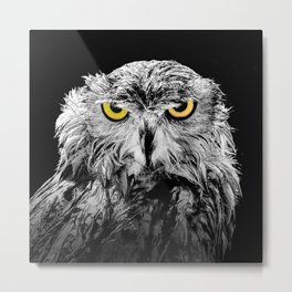 Owl photograph, black and white, with colored golden eyes Metal Print