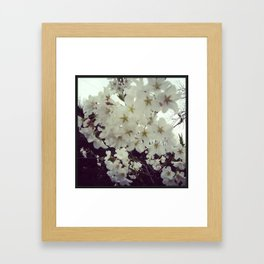 Japanese Cherry Blossoms Framed Art Print