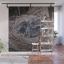 Baby robins in nest (fledglings) Wall Mural