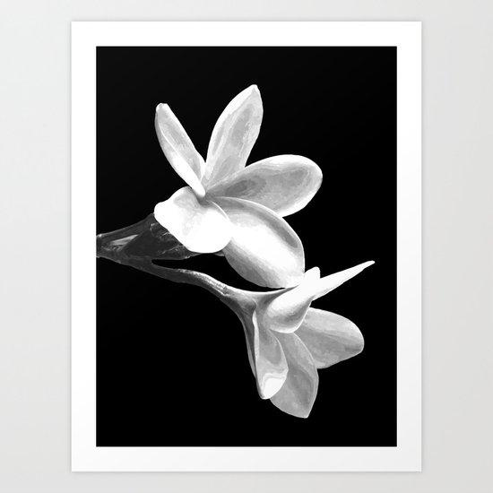 White Flowers Black Background by alemi