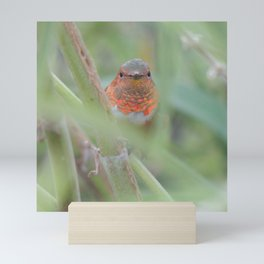 An Allen's Hummingbird Amid Mexican Sage Mini Art Print
