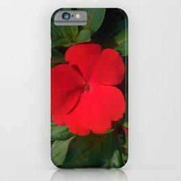 Red New Guinea Impatiens iPhone Case