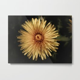 DESATURATED YELLOW DANDELION FLOWER Metal Print