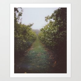 Orchard Row Art Print
