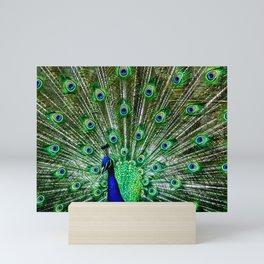 The peacock of Hellabrunn Mini Art Print