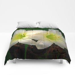 Glowing white daylily flowers - Hemerocallis Indy Seductress Comforters