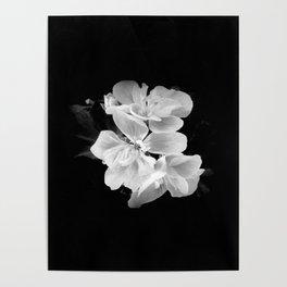 geranium in bw Poster