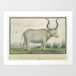 Bos taurus Cape Ox, Robert Jacob Gordon, 1778 Art Print