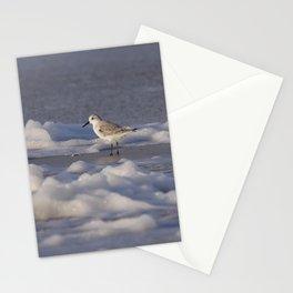 Foamy Sanderling   Calidris Alba   North sea coast beach   The Netherlands   Fine art bird photography Stationery Cards