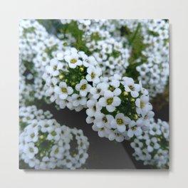 white flower 13 Metal Print