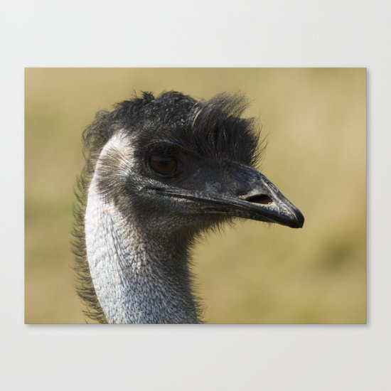 Emu with a bad hair day Canvas Print