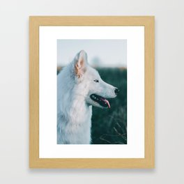 White Wolf Tongue Out (Color) Framed Art Print