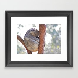 Sleeping in the Trees - Koala Bear Framed Art Print