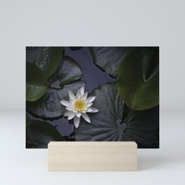 white water lily Mini Art Print