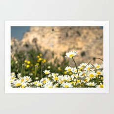 Spring Camomile Art Print
