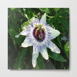 Beautiful Passion Flower With Garden Background  Metal Print