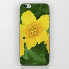 Marsh Marigold Caltha Palustris iPhone Skin