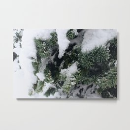 Snow Frosted Pines Metal Print