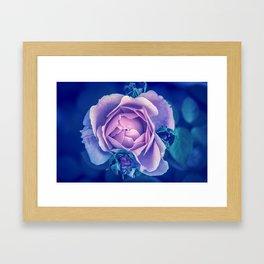 Rose Explanation Framed Art Print