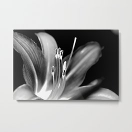 Aflame Flower - Black and White Version Metal Print