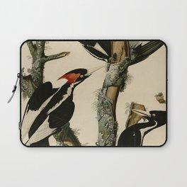 66 Ivory billed Woodpecker Laptop Sleeve