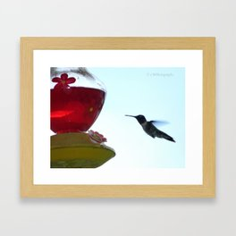 Thirsty Bird Framed Art Print