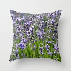 BLUE FIELD of LAVENDER Throw Pillow