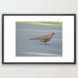 Morning Dove Framed Art Print