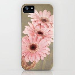Four Pink Gerberas iPhone Case