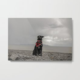 Canine 25 Metal Print