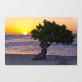 Eagle Beach Sunset in Aruba Canvas Print