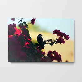 House Sparrow in the Evening Light Metal Print