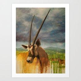 Gemsbok (Oryx Gazella) Art Print
