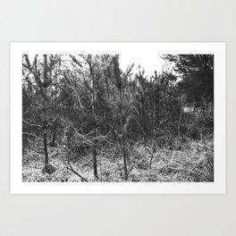 BLACK AND WHITE // TREES Art Print