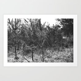 BLACK AND WHITE // TREES Art Print