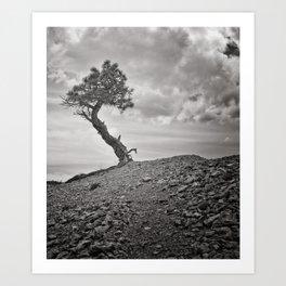 Lone Pine, Bryce Canyon Art Print