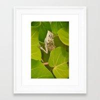 lizard Framed Art Prints featuring Lizard by Bonjourik