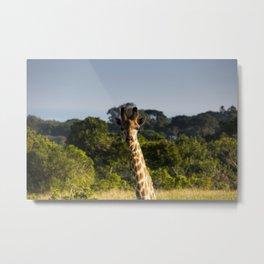 A Giraffe in the Wild Metal Print