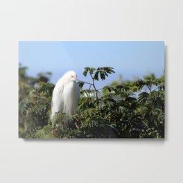 Snowy Egret on Alcatraz Landscape Metal Print