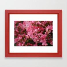 Flowering crabapples in the Rain Framed Art Print